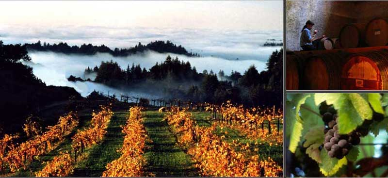 scenic image of vineyards, barrels and wine